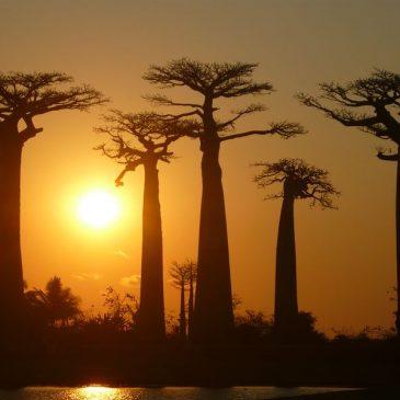 De Bekopaka à Morondava en repassant par Bélo. L'allée des Baobabs.