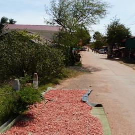 crevettes qui sèchent sur le bord de la route