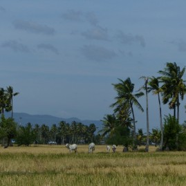 paysage typique du Cambodge